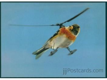 Helikoptervogel, Vogel