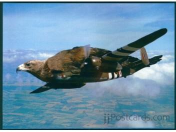 Exotischer Pilot, RAF, Vogel
